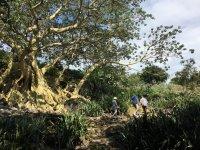 Explora el lago de Chapala y sus alrededores