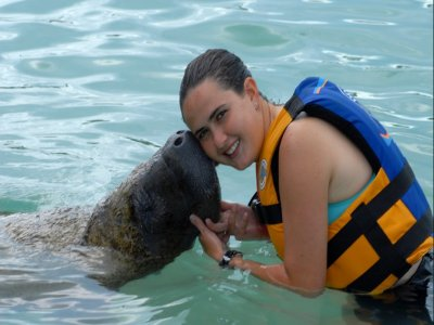 Swimming Sea Life: Dolphins+Sea lions+manatees
