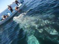 Conocer a las ballenas jorobadas