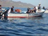 Tour para buscar ballenas