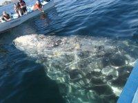 Excursion en busca de las ballenas