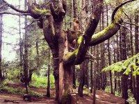 Bosques y areas verdes