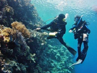 Marko´s Parrotfish Dive Center Buceo