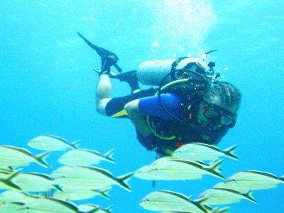 Marko´s Parrotfish Dive Center