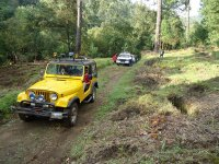 jeeps in the forest