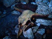 Underwater curiosities