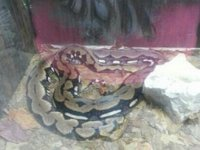 Serpentarium