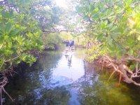 admiring the mangroves