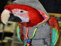 exhibiciones de aves