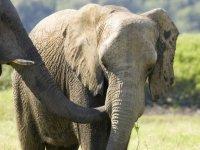 elefante en libertad