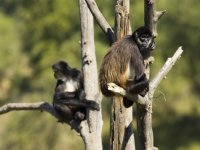 monos en bioparque