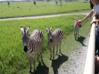 tours safari