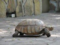 demostracion tortugas