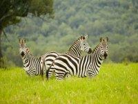safari recreacion