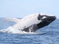 Observar a las ballenas grises