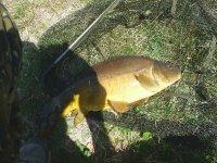 Pesca carpas en Tlaxco