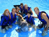 Diversion con delfines
