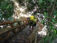 Subiendo a lo alto del cenote