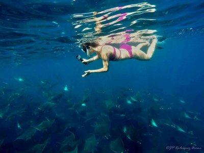 Shark Encounters Mexico