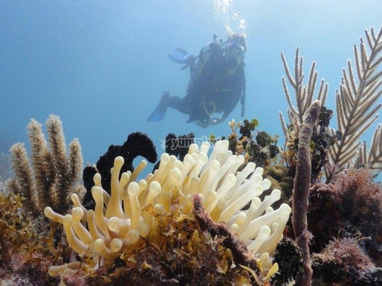 Buceando en arrecifes