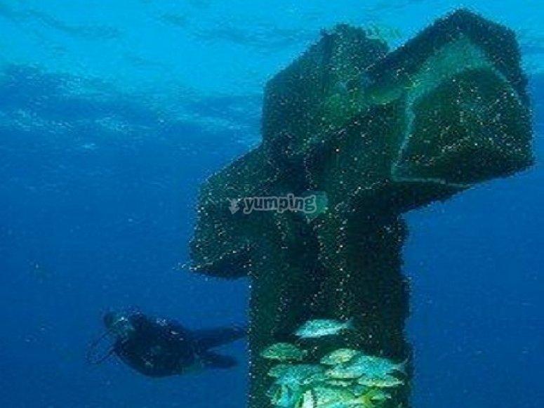 Buceo en el caribe