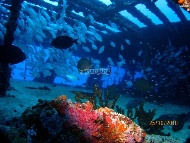 Barcos con arrecifes