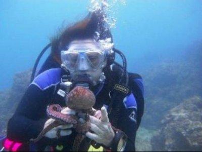 Puerto Vallarta Divers