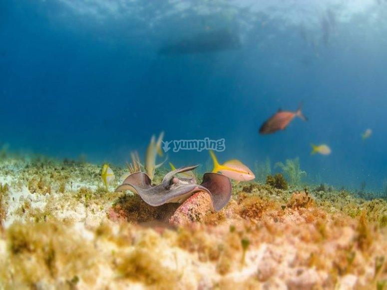 nadando con peces