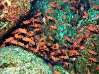 Pececillos en el arrecife