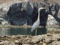 Fauna marina de la zona