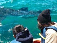 Tour de Nado con tiburón ballena
