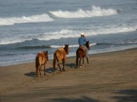 Guides and horses