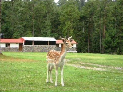 Rancho Ecológico El Mirador