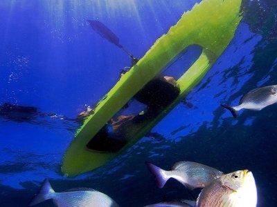 Glass fund Kayak tour and snorkel