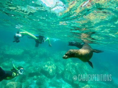 Tour guiado a la Isla Espíritu Santo por 1 día