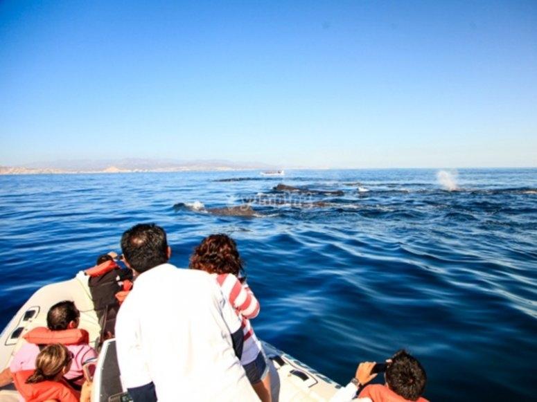 Disfruta del canto de las ballenas