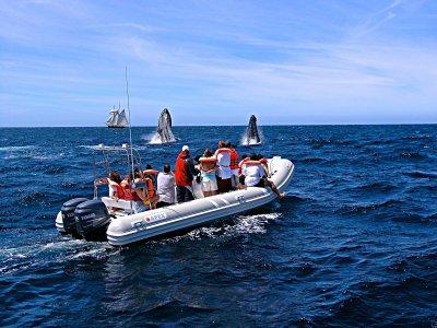 Whale watching en Los Cabos por 2.5 horas