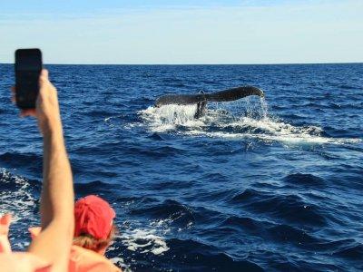 Whale watching en Los Cabos por 2.5 horas niños