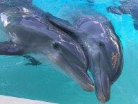 Nado con delfines y parque Xenses precio niños