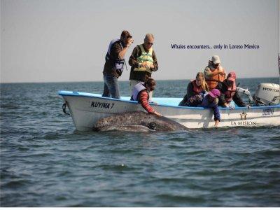 La Misión Loreto Whale Watching