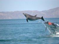 Delfines jugando