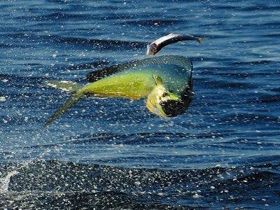 La Misión Loreto Pesca