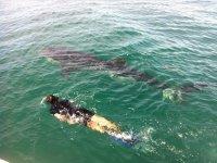 Snorkel tour, 2 bays, Los Cabos.