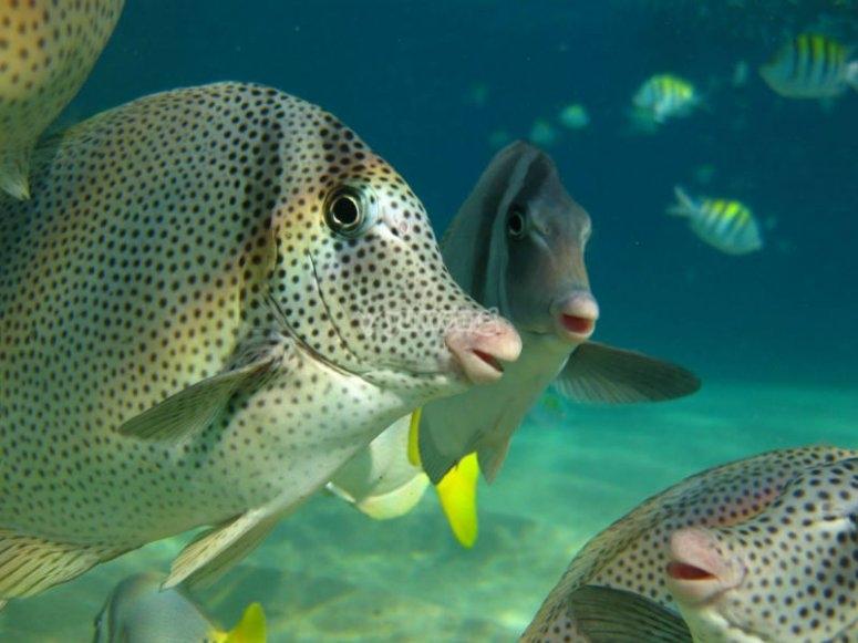 Descubre la belleza de la fauna marina