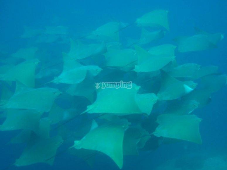 Impresionantes vistas bajo el mar de Los Cabos