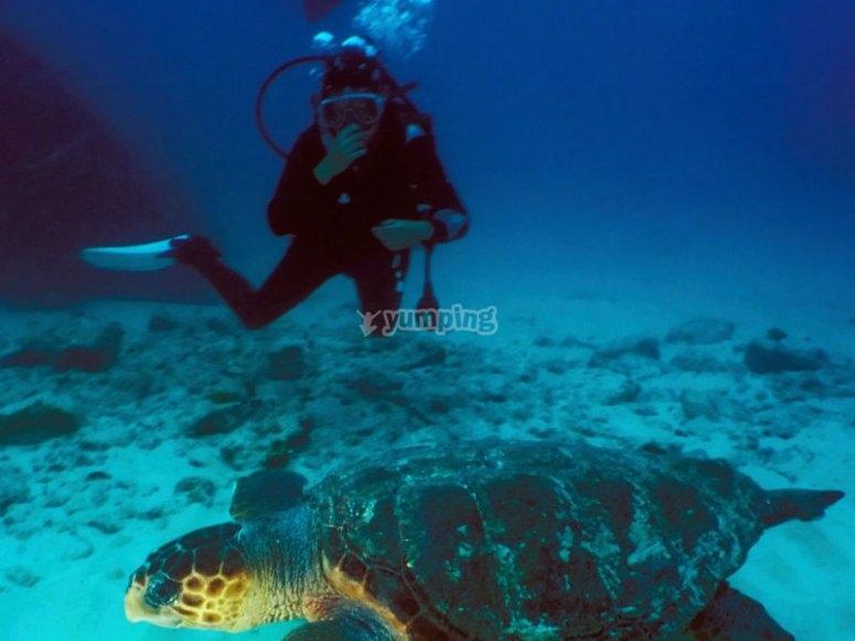 Nada junto a espectaculares tortugas