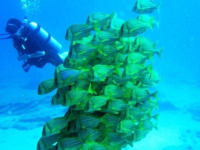Buceo para principiantes en Los Cabos