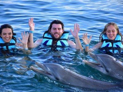 Nado con delfines y leones marinos en Los Cabos