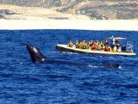 Programa avistamiento de ballenas en Los Cabos