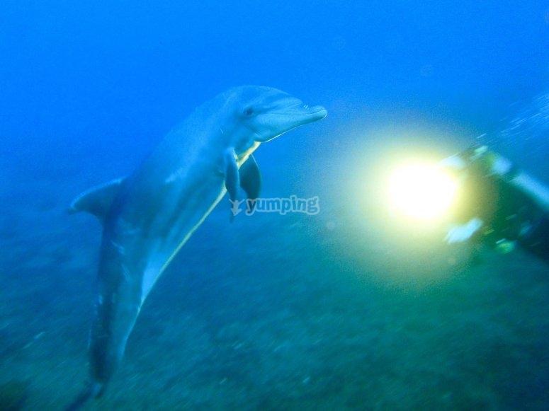 Mundo marino por descubrir